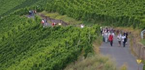 Qualitätswettbewerb für Weinbaubetriebe