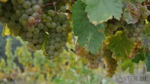 Weinmarkt verliert an Dynamik