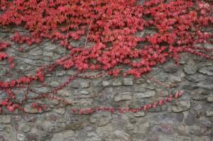 Fotos: Trier zeigt sich von seiner sonnigen Seite – Herbstimpressionen