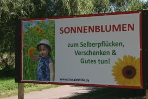 """""""Lass Blumen sprechen"""" – Sonnenblumen für einen guten Zweck"""
