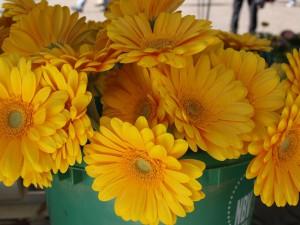 Eiscrème und Blumen: Der Frühlingsanfang in Trier