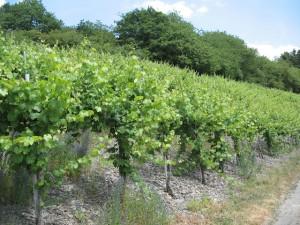 Probetag der Südlichen Wein-Mosel