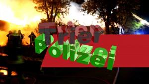 Feuerteufel am Petrisberg – AUFGEPASST