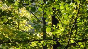 Wiederholter Vandalismus im Waldgebiet