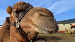 Bei den Tieren – auf dem Trierer Weihnachtscircus