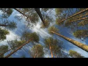 Freizeit: Europas wilde Wälder – Multivisionsshow von Markus Mauthe