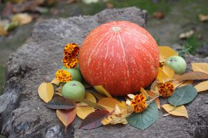 Kürbis & Co: Herbstliche Vielfalt