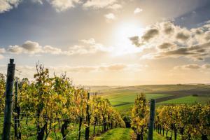 Starker Wein für die Kanzlerin
